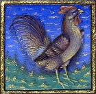 Cock.  From the BNF